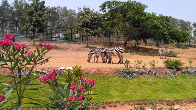 banneraghatta national park