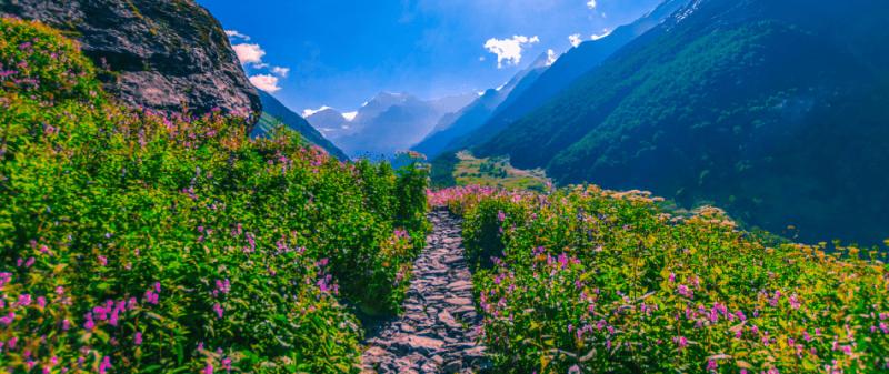 valley of flowers , uttarakhand